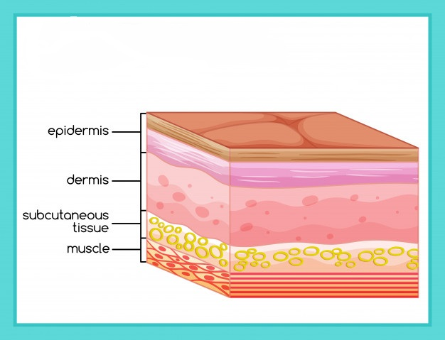 La importancia de la piel y sus funciones: