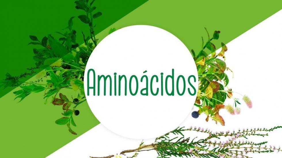 La importancia de los aminoácidos Fontynatural: